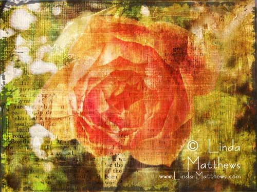 Album Summer roses